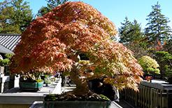 l'arbre en pot du mois