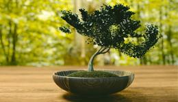 comment faire un bonsai ?