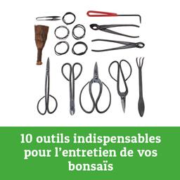outils pour l'entretien des bonsais