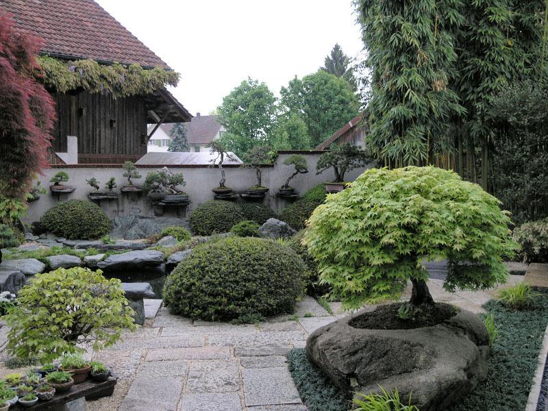 Racine bonsai entretien