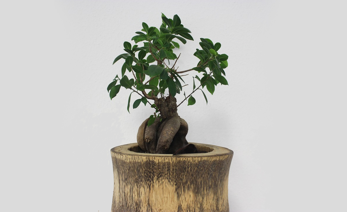 bonsai-interieur