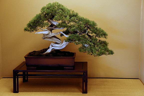 terre bonsai