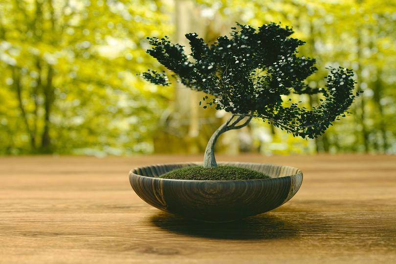 cultiver-bonsai