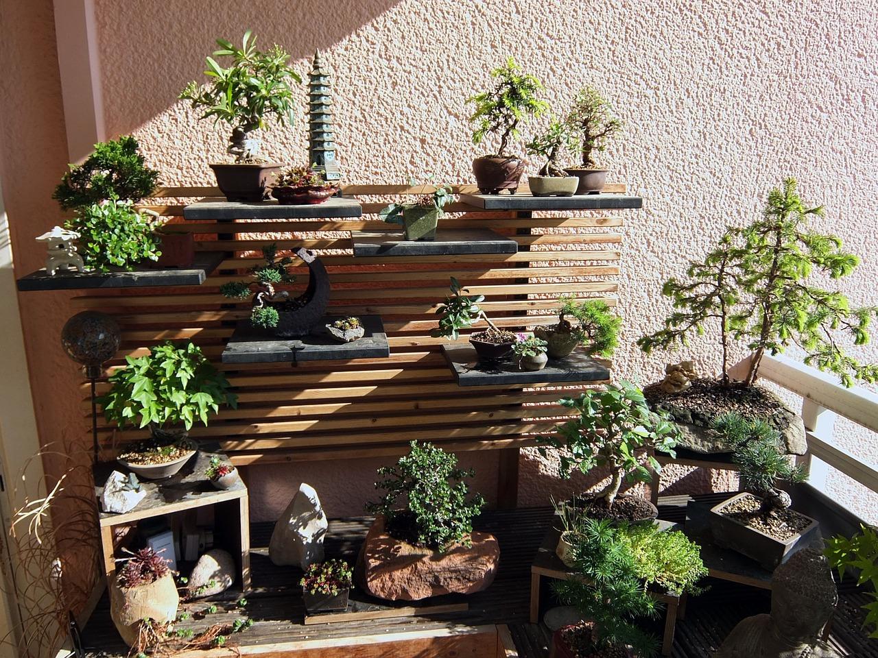 Taille D Un Olivier Comment Faire tutoriel : comment faire un bonsai ? – créer son kit