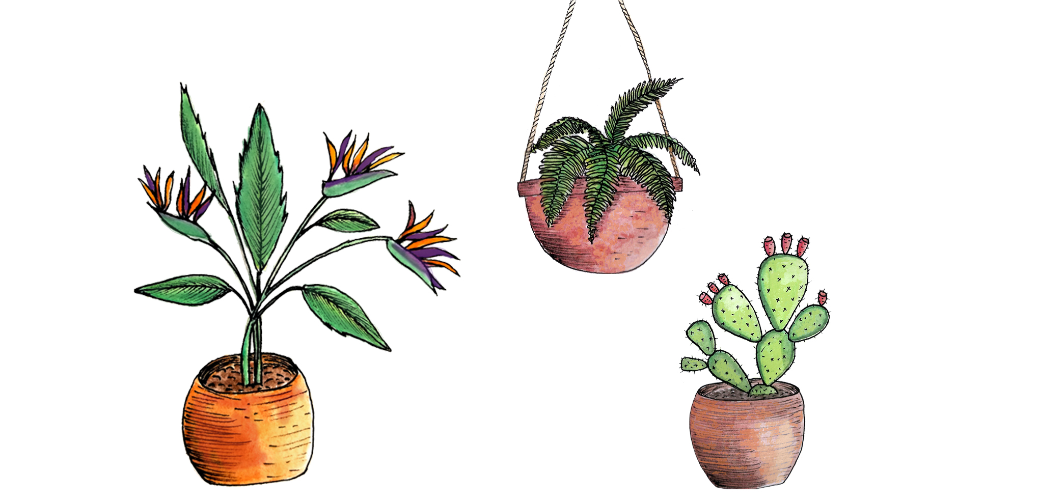 illustrations de plantes